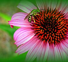 Bee on Me by Sandy Dunn