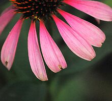 Spike Me Up With Echinacea 2 by Sunshinesmile83