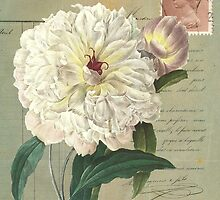 White Peony by claryce84