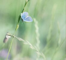 blue wings by Priska Wettstein