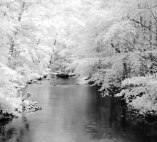 Clarks Creek In Infrared by Sharon Batdorf