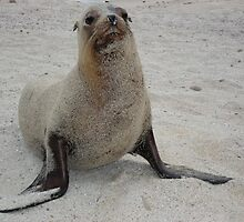 Sandy Sea Lion by Ccarter13