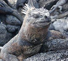 Galapagos Marine Iguana by Ccarter13