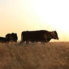 Late afternoon... Free state, South Africa by Qnita