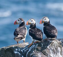 Puffins ~ Isle of May by Margaret S Sweeny