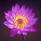 Purple Lotus Flower by Pixie Copley LRPS