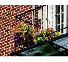 Hanging Basket on Fire Escape Photographic Print