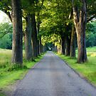 Tree Grove by Jessica Liatys
