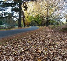 Autumn on Beyers Avenue, Hill End by DashTravels