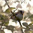 Long-tailed Tit by DExPIX