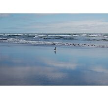 Seagull Seascape Photographic Print