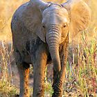 South Luangwa Baby Elephant by JenniferEllen