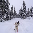 Husky Sleighing Through the Forest by Honor Kyne
