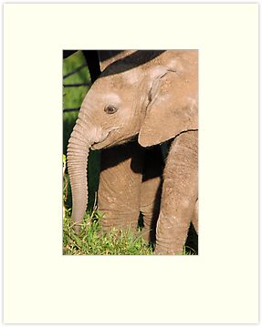 Beautiful Baby Elephant by JenniferEllen