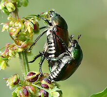 Love Bugs. by William Brennan