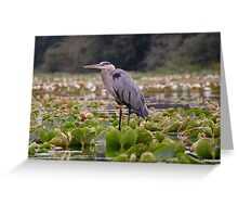 """Great blue"" Greeting Card"