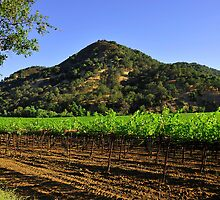 Winters Road Vineyards  •  Winters, California by Richard  Leon