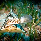 turn and face, Cow fish from behind by JonMilnes