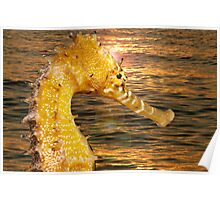 Sea Horse sun rise Poster