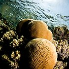 underwater honey by JonMilnes
