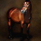 Horse portrait by Nicky Stewart