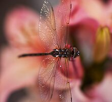 Dragonfly Peaceful by mikereid