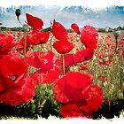 Poppies in a Field 2 by Smudgers Art