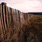 Beach Fencing by Paul Shellard