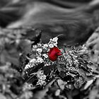 """ Lost Rose - Nine Mile Creek, Camillus NY "" by DeucePhotog"