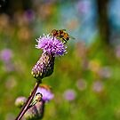 BEE ON THISTLE by RGHunt