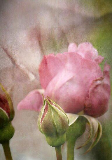 Go Softly  by Lynda Heins