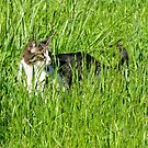 Sneaking Cat in a Field by carls121
