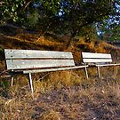 Autumn Benches by Petrea Burchard