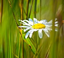 White Flower in the brush by Artc2011