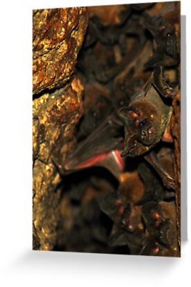 Bat Cave - Brazil by Jason Weigner