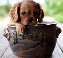 Potted Puppy (2) by Tanya Rossi