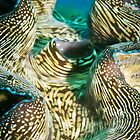 Giant clam by JonMilnes