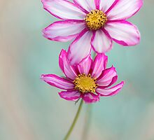 Summer delight by Mandy Disher