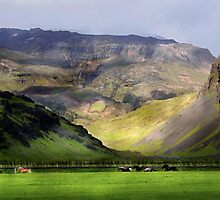 Running Horses Iceland II by Louise Fahy