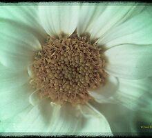 Daisy Daisy by David's Photoshop