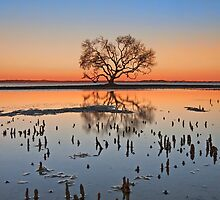 Winter Dusk - Victoria Point Qld by Beth  Wode