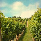 vineyard in july by Iris Lehnhardt