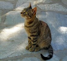 Cat at Greek Taverna by HELUA