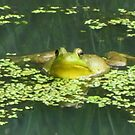 Bullfrog In Duckweed by lorilee