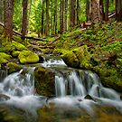 Cascades Creek by Charles &amp; Patricia   Harkins ~ Picture Oregon