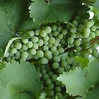 Grapes on the Vine by Wviolet28