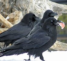 Raven Snack Trio by DWMMPhotography