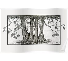 Linden Trees Poster