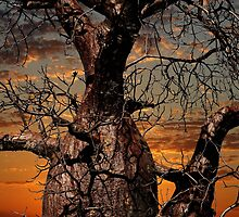 Boab Tree Trunk by Mark Ingram Photography