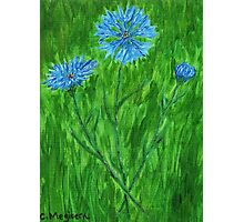 Cornflowers ~ Hope for a Cure - ALS Photographic Print